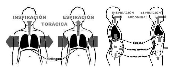respiración toracica vs respiracion abdominal